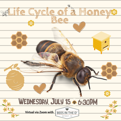Life Cycle of a Honey Bee - Kids program. REGISTRATION CLOSED