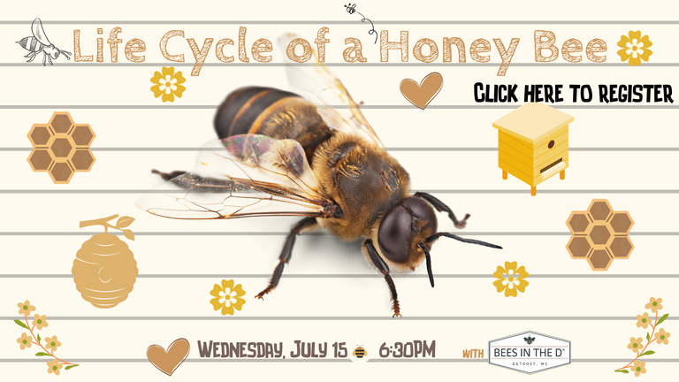 CAROUSEL Life Cycle of a Honey Bee 7.15.20.png