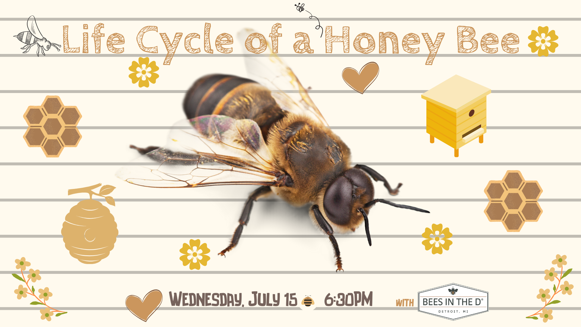 FB EVENT Life Cycle of a Honey Bee 7.15.20.png