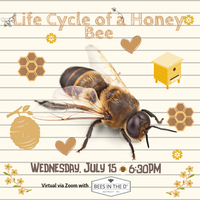 Virtual program via zoom for kids about bees