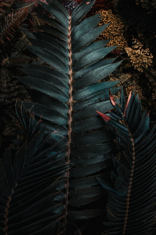 US Botanic.jpg